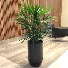 office indoor plants. Planters Contemporary Office Indoor Plants