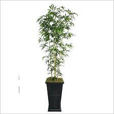 office plants for sale. Modren Plants Houseplants  For Office Plants Sale