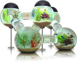 Cool Aquariums Un Aquarium Labyrinthe When Georgi Moves In Pinterest Fish