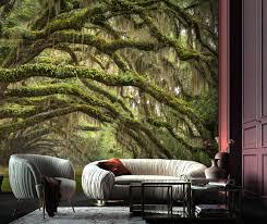 wallpaper,oak,tree,nature,wood,self ...
