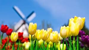 spring tulip desktop wallpaper. Beautiful Desktop Free Spring Desktop Wallpaper  Spring Wallpapers Hd Desktop Background  Free Flowers  Intended Tulip