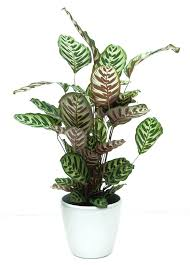 best office plants no sunlight. Asian Indoor Plants Best To Grow Indoors Without Sunlight Inspired Office No