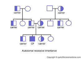 Cystic Fibrosis Inheritance Pattern Classy The Genetics Of Cystic Fibrosis