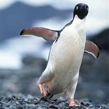 emperor penguins eating. Plain Eating Adlie Penguin And Emperor Penguins Eating M