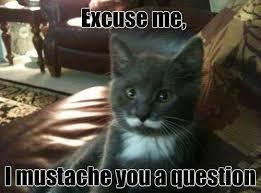 Funny Cat Memes To Get You Through The Day via Relatably.com