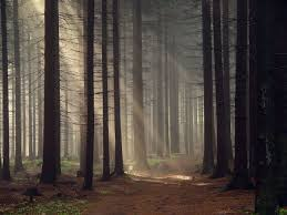 Cool Forest Backgrounds Cool Forest HD Wallpaper 5mpx 5mxpcom