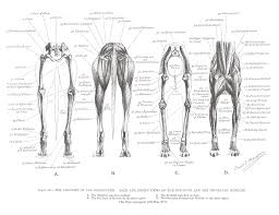 Greyhound Anatomy Diagram Back And Front Views Of The
