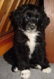 black and white terrier mix.  Terrier Intended Black And White Terrier Mix A