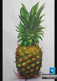 pineapple drawing color. title : pineapple medium: pencil color material: drawing paper a3 year 2010 6