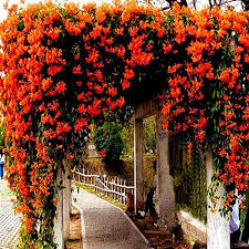 Garden With Lattice Fences And Climbing Plants  Outdoor Lattice Climbing Plants For Fence
