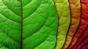 wallpaper hd 1080p nature green. Simple Nature Nature Wallpapers On Wallpaper Hd 1080p Green E
