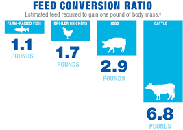Cattle Feed Conversion Charts Why It Matters Global Aquaculture Alliance