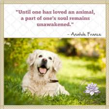 Pet Quotes Awesome Loss Of Pet Quotes