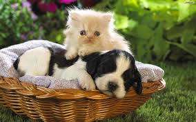 dogs and cats wallpaper. Exellent Wallpaper Wallpapers  Intended Dogs And Cats Wallpaper A