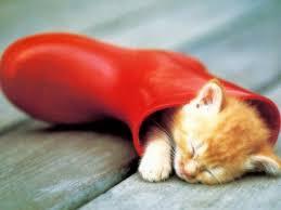 cute kittens sleeping on pianos. Wonderful Cute Sleepy Like Sunday Morning Throughout Cute Kittens Sleeping On Pianos R
