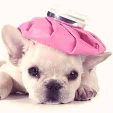 puppy 7 signs of a sick puppy and the solutions