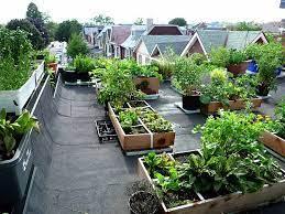 organic kitchen garden in your terrace