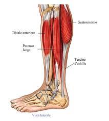 Tendine d'achille,gamba,tendinite | ginnastica | Achille, Dolore alla  caviglia e Tendine di achille