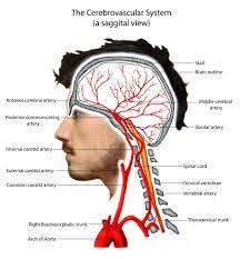 Pathophysiology Neuro4students