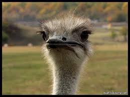 <b>Экскурсия на страусиную ферму</b>. - YouTube