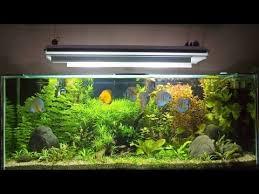 Fish Tank Maintenance Chart Archives Blog Galore