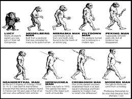 Evolution Of Man Chart 43 Expert Chart Human Evolution