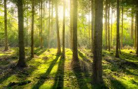 Understanding Random Forest Towards Data Science