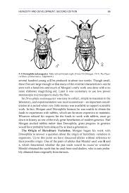 morgan and drosophila heredity and development second edition page 88