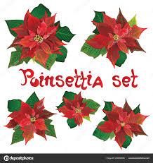 Roten Weihnachtsstern Vektor Blumen Set Weihnachten Symbole