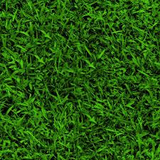 green grass background texture download photo green grass texture