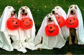 howloween   photo essays   time halloween pets animals dogs cat costume