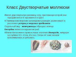 Двустворчатые моллюски характеристика строение процессы  Биология двустворчатые моллюски