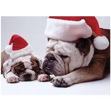 22 best bulldogs images on Pinterest | English bulldogs, Animals ...