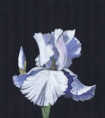 111 best white flower paintings images on flower white flower paintings