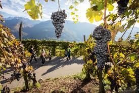 Risultati immagini per la strada del vino valtellina