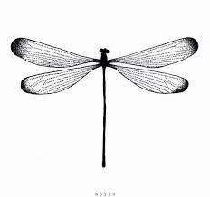 Tattoo Sketch Dotwork Linework Minimal Nosov Nsv Dragonfly Sketches