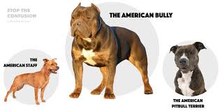 Types Of Pitbulls Chart Different Types Of Pitbulls Apbt American Bully Bulldogs