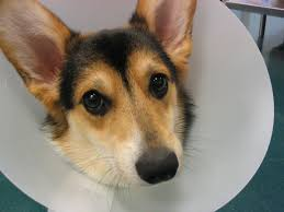 best collar for dogs after surgery not plastic cones