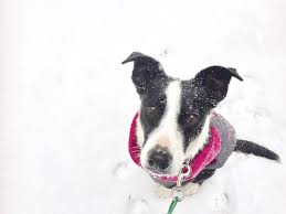 top tips to protect paws in the cold winter weather