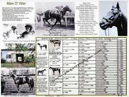 Race Horse Man O War Picture Pedigree Photo Chart One Of The Greatest Xmas Gift Ebay