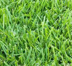 winter garden lawn service florida s