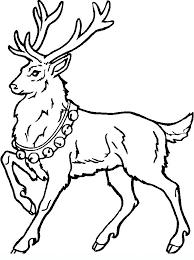 Disegni Da Colorare Degli Animali Del Bosco Animali Da Colorare