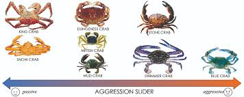 Crab Species Chart How To Cook Chilli Crab Lessons Tes Teach