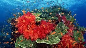 Kết quả hình ảnh cho san ho đỏ