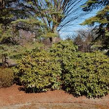 Berm Garden Designs How To Build And Use Berms In Your Yards Landscape