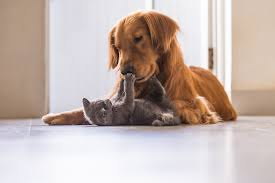 Did you know that the average veterinary practice processes at least 500 debit/credit card swipes per month? Wells Fargo Health Advantage Review Veterinary Care Credit Card