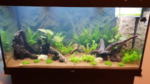 best 75 gallon aquariums 2021 edition