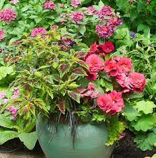 Small Picture 361 best Container Gardening Inspiration images on Pinterest