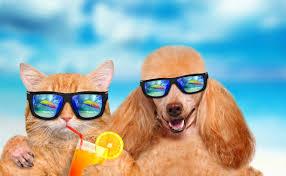 Summer Survival Guide for Cats & Dogs | The House Call Vet | Vet Near Me | Kenmore | Sunnybank | Brisbane
