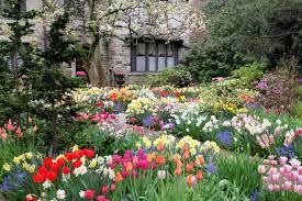 flowers for garden. Flower Garden Flowers For